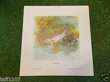 Fish Print TROUT  SILVER GHOST 24 X 25 FISHING ANGLING