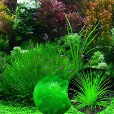 1000X Mixed Aquatic Water Moss-Live Green Grass Seeds Aquarium Tank Plant Seeds