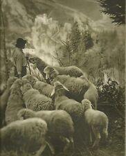 K0388 Pastore - Collina - Gregge di pecore - Immagine fotografica (Stagnoli)