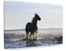 STUNNING BEACH SEA HORSE ANIMAL CANVAS PICTURE PRINT CHUNKY FRAME #3837