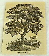 1832 small magazine engraving ~ BRADFRUIT TREE ~ Bread-Fruit