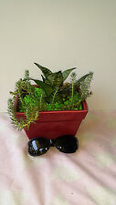 cactus miniature garden