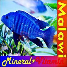 Malawi Mineralien + Vitamine 1Liter Sü�Ÿwasser Fische Buntbarsche