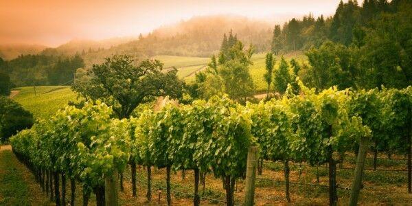 Wine Country Treasures