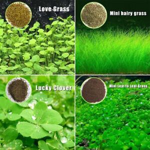 Aquarium Grass Plant Seed Water Aquatic Home Fish Tank Plant Easy Grow Mini Leaf