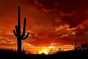 MASSIVE  photo landscape art   A0 CANVAS PRINT Nevada cactus mexico  sunset