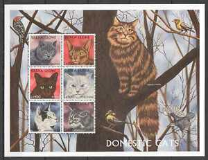 NW0605 SIERRA LEONE DOMESTIC CATS FAUNA PETS DOMESTIC ANIMALS 1KB MNH