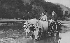 B78091 types folklore costumes car cu vaci chariot cow real photo   romania