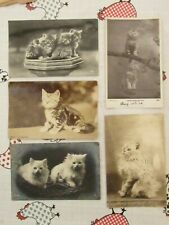 Vintage Cat Postcards RP (5) Collection Original  fc58