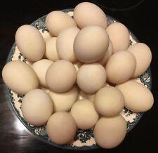 12 Cage Free, Free Range Organic Duck Eggs.