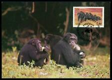 Sierra Leone MK scimmia scimpanzé Chimpanzee Monkey carte MAXIMUM CARD MC cm ba48
