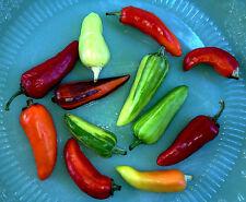 Fish Chili 10+ Samen - BESONDERS und SCHäRF!