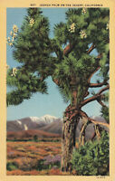 Postcard Joshua Palm On The Desert California
