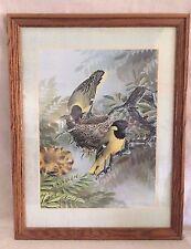 Vintage 1975 Framed Bird Print By Simon Calburn Two Yellow Birds