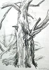 """Wolfgang von Websky 1895-1992 Wangen / Lithographie """"Baum"""" / um 1972 Schlesien"""