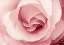 """Tela Floreale Arte Stampa Rose Rosa Fiore incorniciato 30 """"X20"""""""