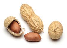 Cacahuete  Mani (Arachis hypogaea) calidad  32 Semillas