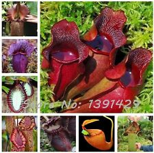 Nepenthes Seeds Flower Herbs Carnivorous Plants Purify Air Catch Insect 100PCS