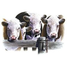 """CATTLE - HEREFORD COWS 3 HEADS on One 16 Inch Fabric Panel To Sew.Pic 7"""" x 11""""."""