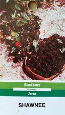 2'-3' Shawnee Blackberry Plant Healthy Shrubs Home Garden Plants Blackberries
