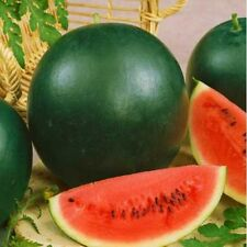 Vegetable Water melon Sugar baby 25 seeds Fruits
