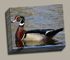 Wood Duck on Ladies Lake Gallery Wrapped Canvas Wildfowl Photos by Charlie Bates