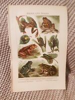 Frogs & Toads - 1924 Book Print
