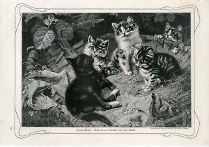 c1900 LITTLE CATS KITTENS Antique Engraving Print Paul Matschie