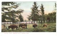 Postcard WA Tacoma Point Defiance Park Buffalo RPPC Real Photo c1907