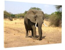 AFRICAN ELEPHANT CANVAS PICTURE PRINT WALL ART CHUNKY FRAME LARGE 1787-2