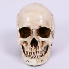 Halloween Resin Simulation 1:1 Skull head Decoration Ornament Props Life Size