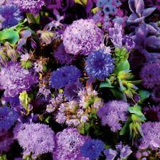 Pflanzen Mix Blumenwiese Garten Blumen Blau 300 Samen Nr.300