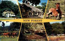 Great Britain Postcard color más imagen-ak tarjeta postal con animales caballo caballos