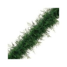 Plumosus Garland / Wholesale / Grower Direct