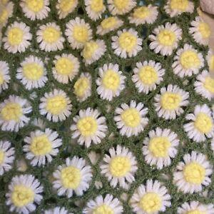Vintage Handmade Small Afghan 70s Lap Blanket Daisy Chain Crochet Armchair Throw