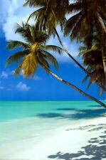 Tropical Beach Poster Print, 24x36