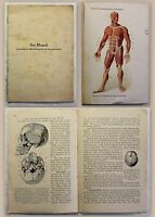 Der Mensch Grundzüge der Menschenkunde und Gesundheitslehre Schmeil um 1920 xz
