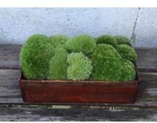 Cushion Moss Pillow Moss,Terrarium,Fairy Garden Crafts, Vivarium