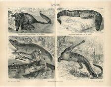1887 NILE CROCODILE GAVIAL SEA CROCODILE AMERICAN ALLIGA Antique Engraving Print