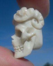 Skull, Teschio con corna in CORNO SCOLPITO Memento Mori-miracolo camera!