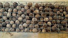 Black Walnuts In Shell 10 lbs. Organic Northeast Iowa 2016 Crop