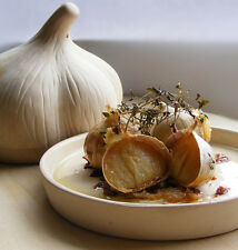 Garlic Cookbook, eBook in PDF on CD - FREE SHIPPING!