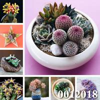 100 PCS Seeds Mini Succulent Cactus Bonsai Rare Perennial Herb Plants Garden New