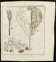 1777 - Gravure de l'anatomie d'une poire - Botanique - Académie Des Sciences