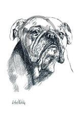Old English Bulldog 05, Kunstdruck einer Kohlezeichnung, 30 x 21 cm, Hunde