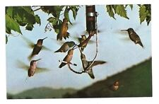 THREE RIVERS CA Noisy Water Restaurant Hummingbirds Vtg