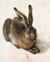 Young Hare by German Albrecht Durer. Animals Repro choose Canvas or Paper