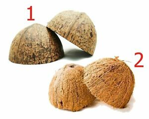 Natural Coconut Bowl 2 Pieces Halves Coconut Shell for handicraft or pet feeder