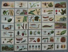 Vintage Cigarette Cards WD HO Wills - Garden Life x35 Part Set Pre WW1