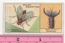 How Common House Fly Walks Upside Down 90+ Y/O Ad Trade Card